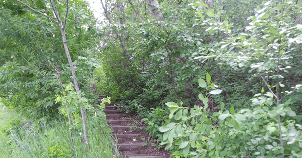 Roxboro Stairs Thumbnail