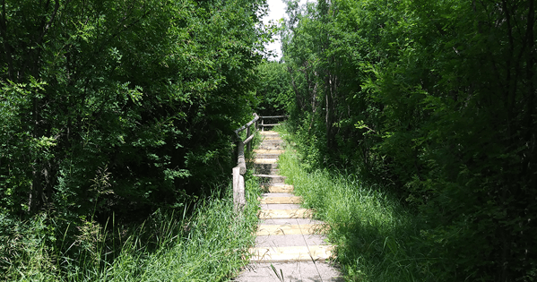 Elbow River Stairs Thumbnail
